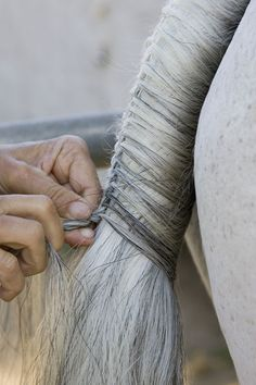 How to on Tail Braiding. Nothing prettier than a perfectly braided tail!makes me want to horse show :) All The Pretty Horses, Beautiful Horses, Animals Beautiful, Horse Braiding, Tail Braids, Horse Mane, Horse Grooming, Horse Tips, Show Horses