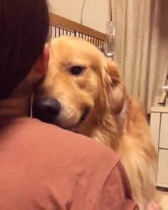 This doggo is full of love, support, and emotion ❤️ – The Botanist - Baby Animals Cute Baby Dogs, Cute Funny Dogs, Cute Dogs And Puppies, Cute Funny Animals, I Love Dogs, Funny Pics, Doggies, Funny Memes, Cute Animal Videos