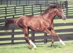 Belted Earl(1978)Damascus- Mocassin By Nantallah. Outcross In First 5 Generations. 6 Starts 4 Wins $29,420. Won Desmond S(Ire-3), Greenland S(Ire-3).: