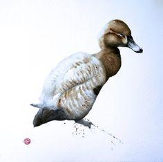 Pochard Female - Karl Martens - watercolor