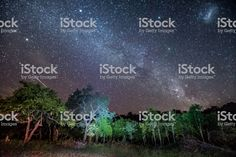 The Milkyway stretches across the sky over African bush at Umkhuze game reserve, part of Isimangaliso Wetland Park in South Africa royalty-free stock photo Wetland Park, Game Reserve, Image Now, South Africa, Stretches, Royalty Free Stock Photos, African, Sky, Website