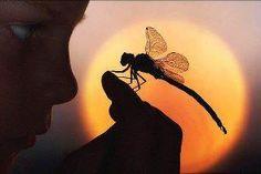 Boy & Dragonfly♥