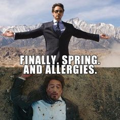 spring allergies meme Puns Jokes, Funny Memes, Hilarious, Spring Meme, Allergy Memes, Spring Allergies, Friday Humor, Tony Stark, Favorite Quotes