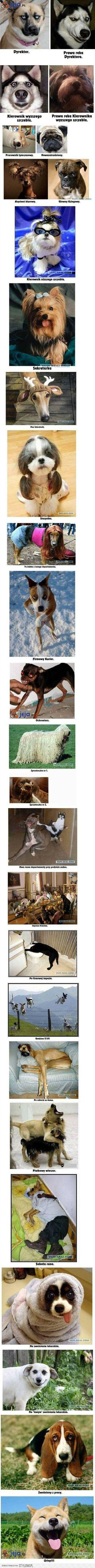 Cute Cats And Dogs, Animals And Pets, Funny Animals, Cute Animals, Wtf Funny, Hilarious, Funny Mems, Dogs Of The World, Man Humor