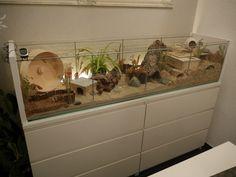 Une vitrine detolf transformé en une cage. Detolfvitrine in Hamsterkäfig umgewandelt. Detolf kooie