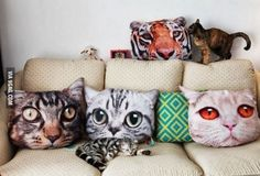 cat pillows. I guess you can get an 3XL tshirt printed with cat or other animals and then cut them up and sew them down to make that. definitely a to-do for me!