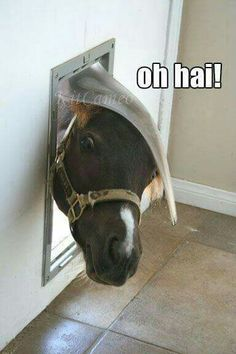 Horses trying to fit through the cat flap