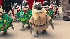Penguins in Santa suits waddle through park - TODAY.com