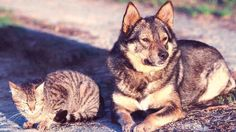 8 Flea and Tick Treatments for Dogs and Cats You Didn't Know About | PetCareRx