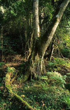 Take a careful path.Rain forests at Tsitsikamma National Park Beautiful Scenery, Beautiful Landscapes, Beautiful World, Beautiful Pictures, Tsitsikamma National Park, Places Ive Been, Places To Go, African Tree, Out Of Africa