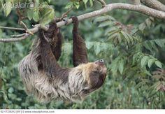 sloths - Google Search