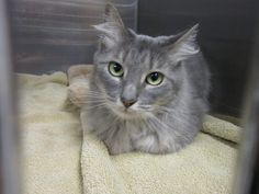 Middletown Animal Control's photo. Middletown Animal Control added 2 new photos. This sweet kitty was found yesterday on Portland Street in Middletown, CT. She appears to be young and is a spayed female. We are hoping her owner is looking for her. Please SHARE! 860-638-4030