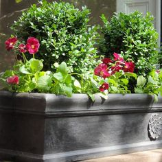 Boxwoods (such as Wee Willie Boxwood) are ideal for window boxes as they require little tending and their dark green leaves complement flowers such as pansies now and heat-lovers later. (link in profile) . . . #monroviaplants #monrovianursery #GrowBeautifully #boxwood #windowbox #weewillieboxwood #gardenlovers #lovegardening #gardening #garden #gardenlifestyle #gardendesign #plants #plantvibes #landscape #Plantsofinstagram #GardenersofInstagram #instagardenlovers #plantgram #plantborder…