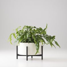 case study tabletop planter
