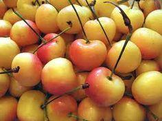 Ranier Cherries, sweet and short summer treat.