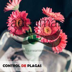 Acuamar. Control de plagas en Elche, Alicante y Murcia