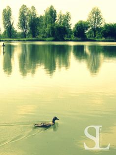Am See - Ente am See
