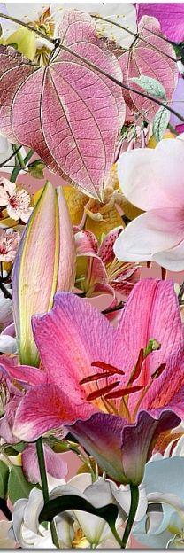 ✯ Pink Lily - Chinese Lantern
