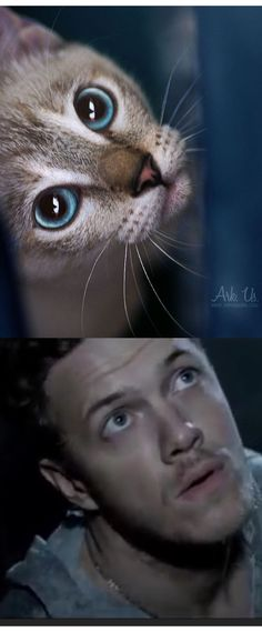 """Apparently Dan Reynolds is a cat. Just going through my Home Feed when I see this cat picture think, """"Wait a minute, that cat, it looks like..."""" Then I made this. @HannahT5657"""