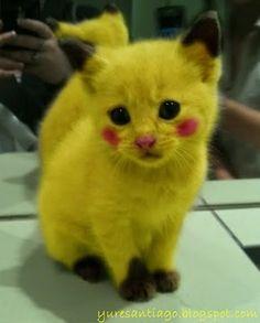 Creo que vi un lindo... ¿#Pikachú ;-?