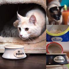 Cat Supplies, Pet Bowls, Cats Of Instagram, Create Your Own, Ceramics, Pets, Tableware, Animals, Ceramica
