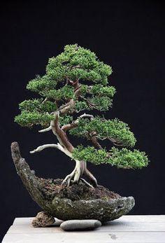 TODO BONSAI: bonsai