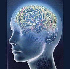 Мозг человека может жить 200 лет