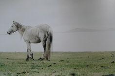 Mongolia's wild horses