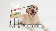 Funny Memes, Jokes, Enfp, Animals And Pets, Labrador Retriever, Comedy, Puppies, Motivation, Inspiration