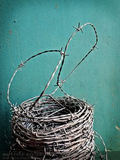 The most attractive I've ever seen barbed wire look.