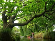 Fancy a punt? Hagley Park, Christchurch, New Zealand. Nz South Island, New Zealand South Island, Beautiful Islands, Beautiful World, Beautiful Places, Oh The Places You'll Go, Places To Travel, Places To Visit, New Zealand Holidays