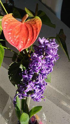 Indoor Plants, Beautiful, Inside Plants
