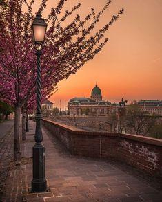 "3,465 Likes, 80 Comments - KRÉNN IMRE (@krenn_imre) on Instagram: ""Blooming Budapest, Part IV. 🌸 🌸 🌸 🌸 (Sunrise with million cherry flowers in the buda castle…"""