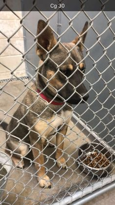 Euth date 3/29/18!!!!!>>>>>>>>>>>>>>>>CODE RED 3/13<<<<<<<<<<<<< Cage 30 - Virginia Impound #10555 Husky x, female, 1 year, brown & tan, 51 lbs Intake 3-6-18 | Out by 3-13-18