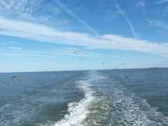 gulls following behind the Cape May Ferry