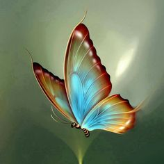 Let your most beautiful dream will become a reality. Good morning quotes for her. Butterfly Clip Art, Butterfly Pictures, Butterfly Wallpaper, Butterfly Mosaic, Butterfly Artwork, Rainbow Butterfly, Butterfly Tattoos, Colorful Wallpaper, Good Morning Good Night
