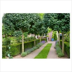 paving and planting - nice driveway feels more like a garden path