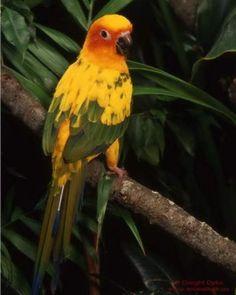 Parrot - good picture