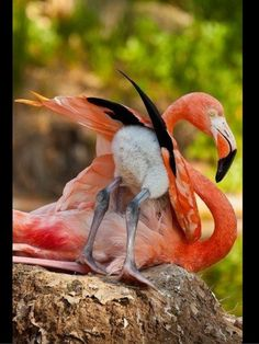 Aranyos madárfotók