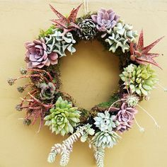 This interesting, living wreath is not hard to make. The step by steps & a video guide you through.