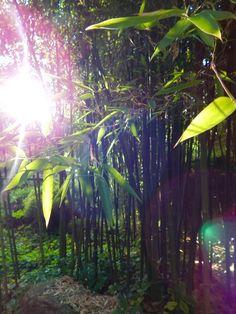 Zon - bamboe