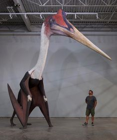 Largest known flying dinosaur <<< dumbass. With a head that big and wings that small it's just a giraffe-lizard with chicken wings. The can not fly. It IS however the largest Pterasoar. Dinosaur Fossils, Dinosaur Art, Dinosaur Pics, Dinosaur Funny, Extinct Animals, Extinct Birds, Prehistoric Creatures, Prehistoric Dinosaurs, Blue Whale