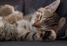 Looks like my kitty Tiger Stripes :)
