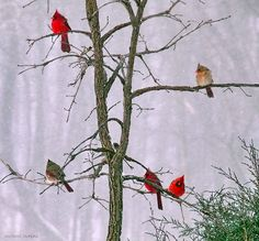 Family Holiday Gathering L1120778 by mcpeak_michael, via Flickr