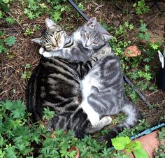 I found my two cats mother and son snuggling in the garden this morning.