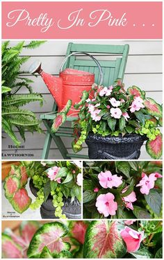 New Guinea impatiens, caladium and a chartreuse creeping Jenny make for a beautiful pink container garden. The red vintage watering can is just added fun!