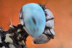 2.A bug's life.