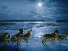 llbwwb:    WINTER WOLVES by Enis.