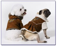 Versace for dogs - Google Search
