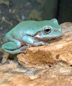 64 Bobert Ideas In 2021 Cute Frogs Tree Frogs Frog